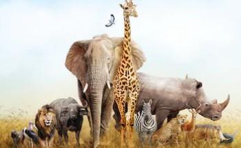 090301  动物科学
