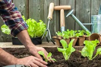 090103  植物保护